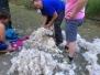 10-6-2015 Schapen en Alpaca's geschoren